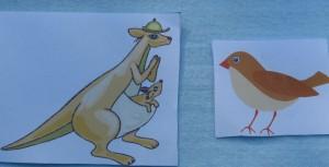 кенгуру и воробей